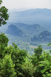Scenic mountain landscape.Beautiful landscape of the forest background in a magical mist tropical green plants in a jungle. Forest background, nature, landscape