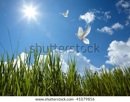 scenic of sky with doves and grass