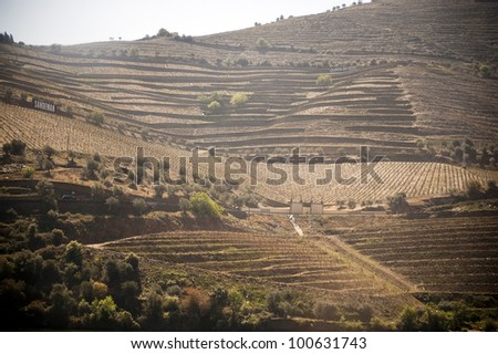 Scenic photo of the Douro Valley in Portugal and vineyards in the mountains
