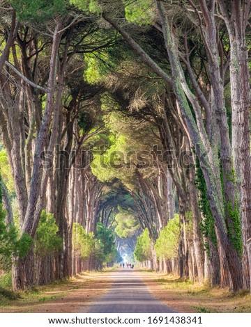 Scenic pine road in the Natural Park of Migliarino San Rossore Massaciuccoli. Tuscany, Italy. ストックフォト ©