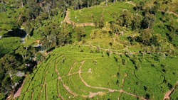 Scenic Plantations of Ceylon Tea in the Mountains of Sri Lanka From Drone, Between Ella and Haputale
