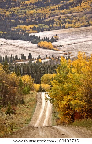 Scenic road in autumn through Cypress Hills Park