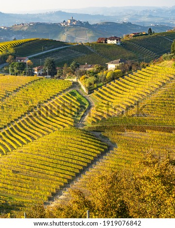Scenic road on a hill among the vineyards of Langhe district near Serralunga d'Alba, Piedmont, Italy Сток-фото ©