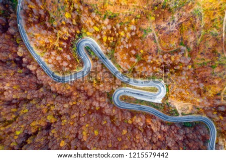 Scenic road trough a forest in the middle of autumn fall season #1215579442