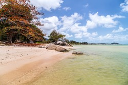 Scenic rocky adriatic beach. Colored fall tree with clear blue sky
