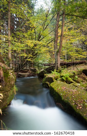 Scenic shot of rapids flowing along lush forest