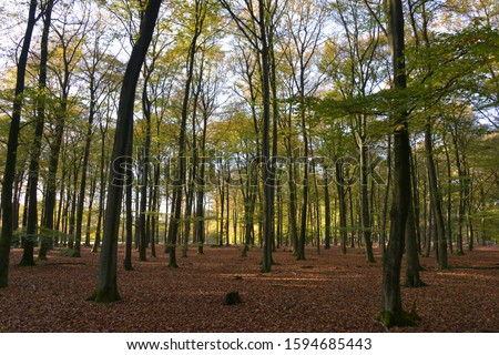 Scenic shot of the forest, Netherlands