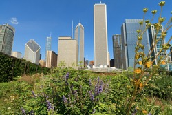 Scenic skyline view of the colorful garden in Millennium Park on a clear blue sky day in downtown Chicago.