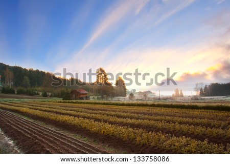 scenic spring HDR sunset landscape over the cultivated farmland