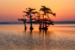 Scenic sunrise,  Reelfoot Lake Tennessee