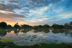 Scenic sunset in African swamps in national park