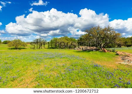 Scenic Texas Hill Country landscape with blooming bluebonnets. #1200672712