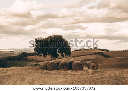 scenic tuscan landscape  hay...
