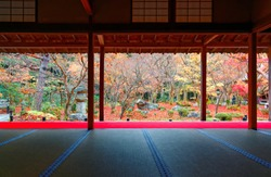 Scenic view from a tatami room by a Japanese courtyard garden with colorful maple trees & fallen leaves in a peaceful Zen ambiance, in Enkoji, Kyoto, Japan, a Buddhist temple famous for autumn foliage