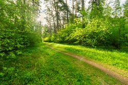 Scenic view in beautiful spring forest with green grass and bushes around the path, trees and small road, leading far away, spring nature reserve landscape
