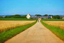 Scenic view of a road through golden wheat field in Finistere, Brittany, France
