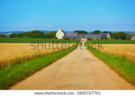 Scenic view of a road through golden wheat field in Finistere, Brittany, France Stok fotoğraf ©