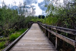 Scenic view of a wooden bridge in a swamp marshland on an overcast day in the pacific northwest