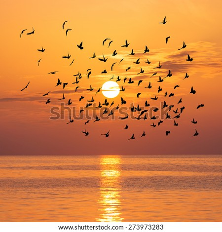 Scenic view of beautiful bright sunset with birds flock silhouettes above sea surface