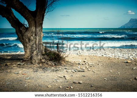 Scenic view of empty bench by tree trunk overlooking blue sea