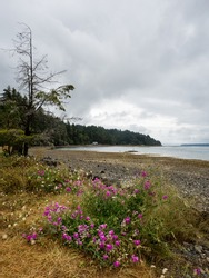 Scenic view of Hood Canal at Triton Cove State Park - WA, USA