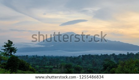 Scenic view of Mount Cameroon mountain with green forest during sunset, highest mountain in West Africa, Cameroon, Africa. #1255486834