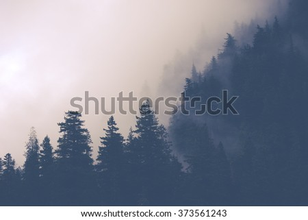 scenic view of mountain forests covering by fog.. #373561243