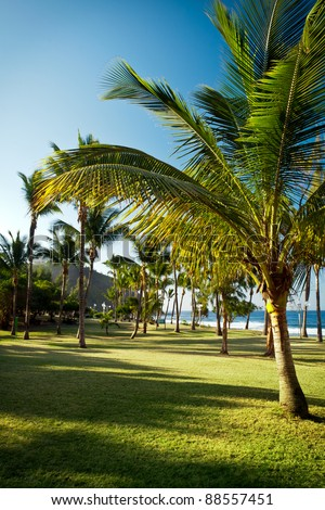 Scenic view of palm trees on Grande Anse beach with sea in background, Reunion Island