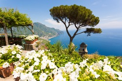 Scenic view of Ravello, Amalfi Coast Salerno, Italy. Famous tree with blue sea and sky, white flowers in foreground.