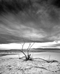 Scenic view of sandy lake shore with dry tree branches
