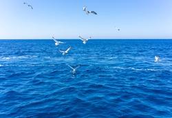 Scenic view of seagulls above aegean sea against blue sky. Santorini, Cyclades, Greece.