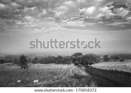 Scenic view of stone wall alongside fields in the Cotswolds, England