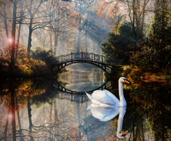 Scenic view of swan in misty autumn pond landscape with beautiful old bridge in the garden with red maple foliage.