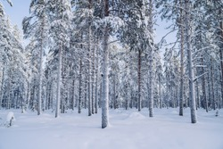 Scenic view of tall white trees in ice and snow in natural environment on north, beautiful wood landscape during winter season getaway destination