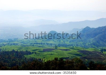 Scenic view of tea plantation in Bandung, indonesia
