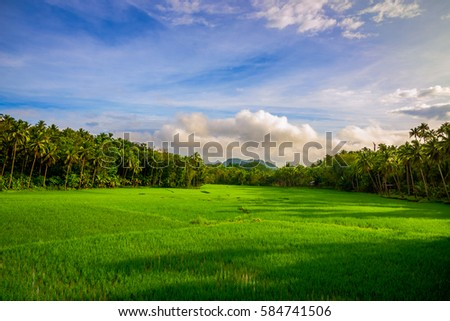 Scenic view of the countryside in Bohol Philippines - Shutterstock ID 584741506