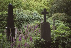 Scenic view of the garden cemetery Hamburg Ohlsdorf, colorful blooming digitalis flowers between beautiful old gravestones