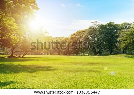 Scenic view of the park with green grass field in city and a cloudy blue sky background
