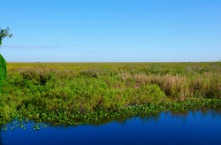 Scenic view of the world famous River of Grass in the Everglades National Park in South Florida showing water swamp land grasses stretching out as far as the eye can see