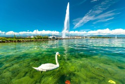 Scenic view of white swan swimming in turquoise waters of Geneva Lake in Geneva Harbor and of the 140m high fountain called Jet d'Eau. Swiss Alps on background. French Swiss, Switzerland.