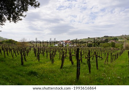 Scenic view to beautiful green hills with vineyards and a house in the field against blue sky in spring from Slovenian coast. Slovenia.