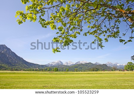 Scenic view with blossoming field of dandelions in Alps, Bavaria, Germany in spring.