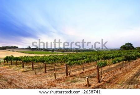 Scenic Vineyard Landscape in South Australia