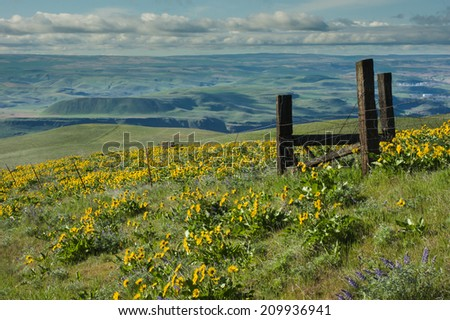 Scenic vista with wildflowers and rolling green hills