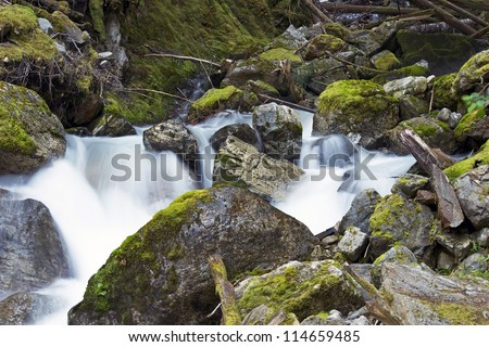 Scenic Washington State. Small Beautiful Mossy Creak in Northern Cascades National Park. Washington State Photography Collection.
