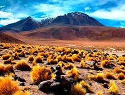 Scenic wild puna in Bolivia Highlands, Altiplano plateau. Stunning Atacama desert landscape. Orange paja brava grass. Festuca orthophylla. Awesome view on snow Andes mountains. Volcano Canapa. Stones.