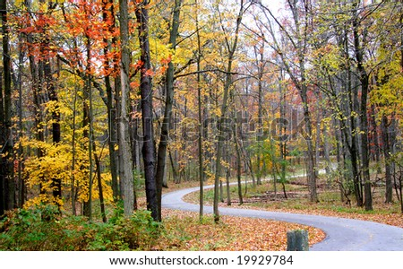 Scenic winding road through colorful trees during autumn time