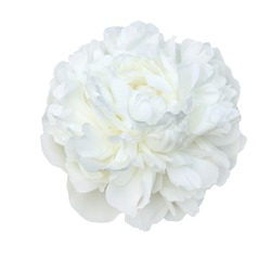 Scented fragrant trendy  pale white peonies isolated on white background. Shallow depth of field.