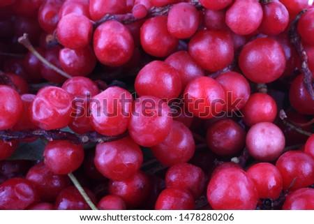 Schisandra chinensis background. Chinese medicine use this berry #1478280206