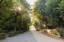 Schonbrunn park with trees tunnel and sunbeams with no people in Vienna, Austria